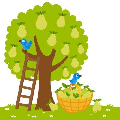 Naklejka Ilustracja wektora drzewa gruszy, drabiny i koszu z zebranych gruszek.