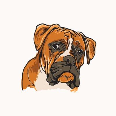 Naklejka Ilustracja wektorowa Boxer Dog