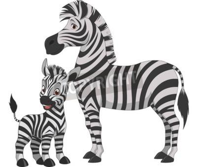 Naklejka Ilustracji wektorowych, zebra dorosłych i młodych zebra, na białym tle