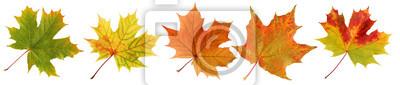 Naklejka Inkasowi jesień liście klonowi odizolowywający na białym tle.