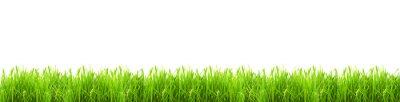 Naklejka Izolowane zielona trawa