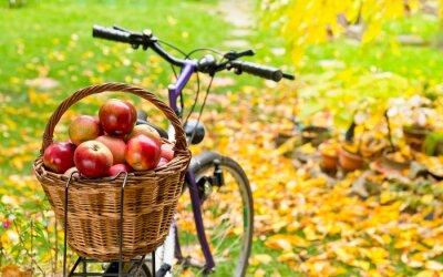 Naklejka jabłka w wiklinowym koszu