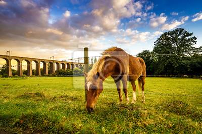 Naklejka Jazda jedzenia trawy na łące z wiaduktu kolejowego i pięknym błękitnym niebem w tle
