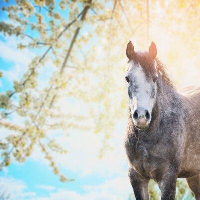 Naklejka Jazda na tle wiosny kwiat natury i niebieskiego nieba