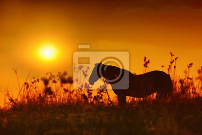 Jazda sylwetka na zachodzie słońca
