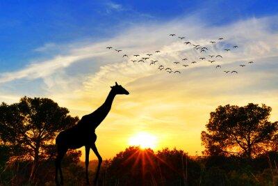 Naklejka jirafa en el paisaje