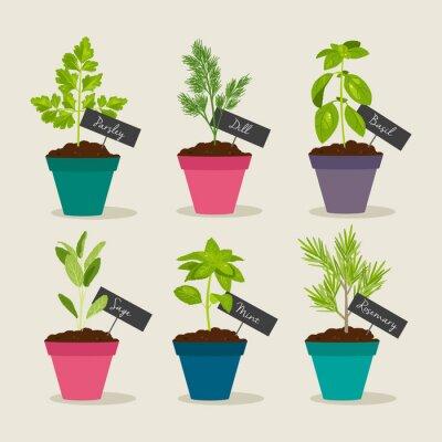 Naklejka Jurek ogród w doniczkach z ziołami, ilustracji wektorowych