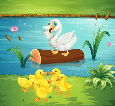 Naklejka Kaczka rodzina przez rzekę