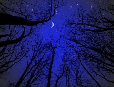 Naklejka Kahle Bäume vor Sternenhimmel