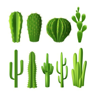 Naklejka Kaktus Set Realistyczne