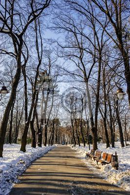 Kalemegdan parku w zimie, Belgrad Serbia
