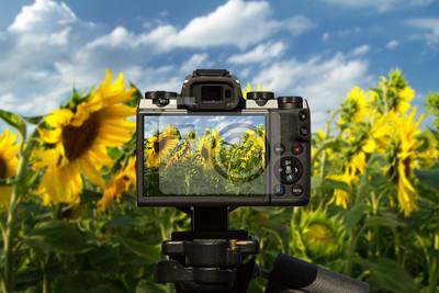 Naklejka Kamera i pole piękni słoneczniki z niebieskim niebem i chmurami
