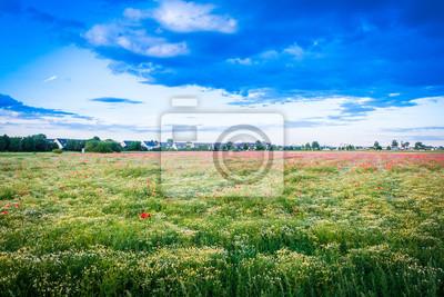 Kamillen- und Mohnblumenwiese mit Einfamilienhäusern im Hintergrund - pole maku