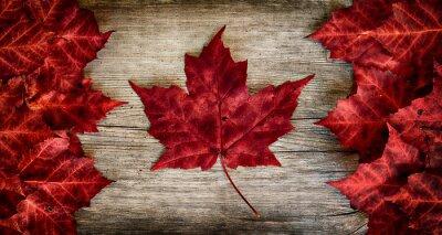 Naklejka Kanadyjska flaga wykonana z rzeczywistym liści klonu na podkładzie Cedar