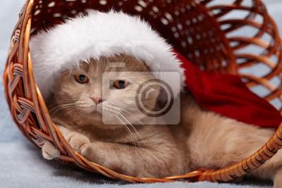 Kapelusz kot sobie Mikołaja leżącego w koszu