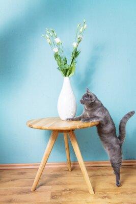 Naklejka Katze schnuppert się Blume