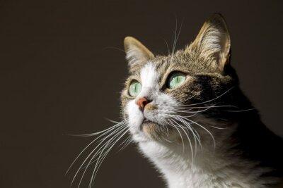 Naklejka kedi