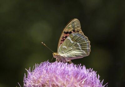 Naklejka Kelebek