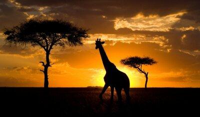 Naklejka Kenia.