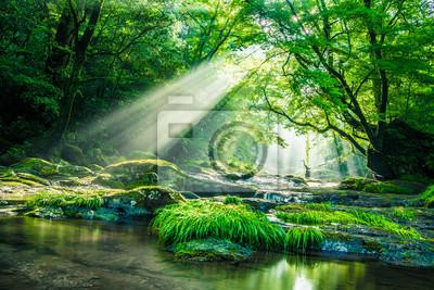 Naklejka Kikuchi valley, waterfall and ray in forest, Japan