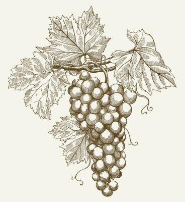 Naklejka kiść winogron
