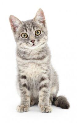 Naklejka Kitten na białym tle