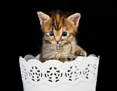 Naklejka Kitten stojących w białym opakowaniu