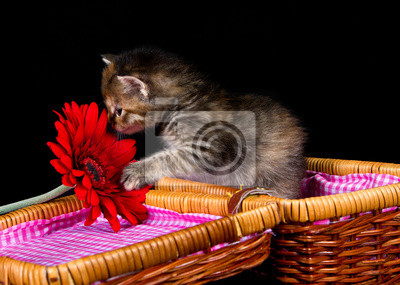 Kitten zapachu na czerwonym kwiatem