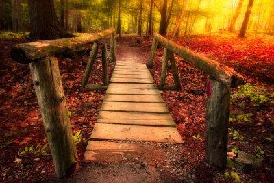 Naklejka Kładka przez las ścieżka w magicznym świetle