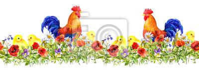 Kogut Kogut i małe pisklęta w trawie, kwiaty. Szwu. Akwarela