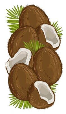 Naklejka Kokos Isolated, kokosowy Vector. Skład kokosowego na białym tle. Kokosów z liści. Żywność ekologiczna, nakrętka. Naturalna żywność.