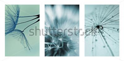 Naklejka kolaż ze zdjęciami mlecze. zdjęcia artystyczne