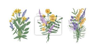 Naklejka Kolekcja bukietów pięknych kwiatów dzikiej łąki i ziół kwitnących. Zestaw bukiety kwiatów na białym tle. Elegancka kwiecista wektorowa ilustracja w realistycznym stylu.