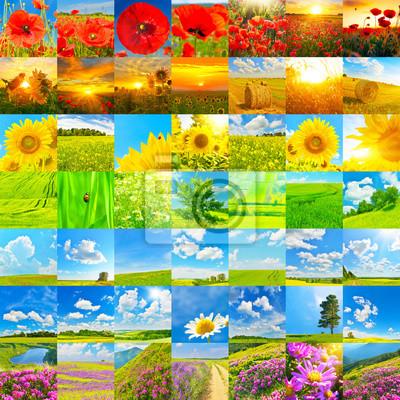 Kolekcja letnich krajobrazów i kwiatów