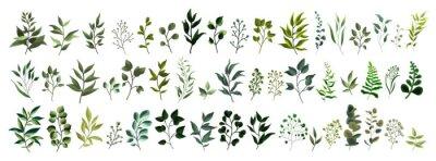 Naklejka Kolekcja zieleni liścia rośliny lasowe zioła tropikalne liście