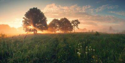 Naklejka Kolorowa wiosna wschód słońca na łące