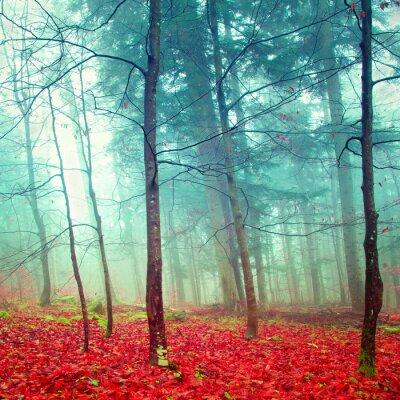 Naklejka Kolorowe jesienne drzewa mistyczne