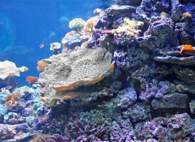 Naklejka Kolorowe rafy koralowej