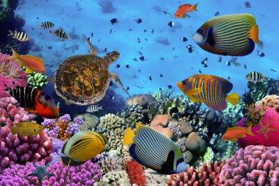 Naklejka kolorowe rafy koralowej z wieloma rybami