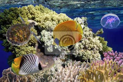 Naklejka Kolorowe rafy koralowej z wielu ryb i żółwi morskich. Morze Czerwone, Eg