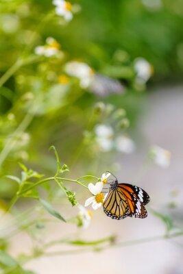 Naklejka Kolorowy motyl w ogrodzie