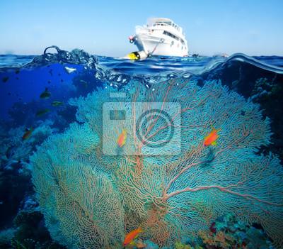 Naklejka Kolorowy podwodny rafa z koralowców i gąbek