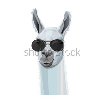 Naklejka Komiczny portret lama w czarnych szkłach. Ilustracja wektorowa na białym tle