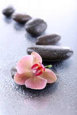 Naklejka Kompozycja z pięknym kwitnące orchidea z kropli wody i