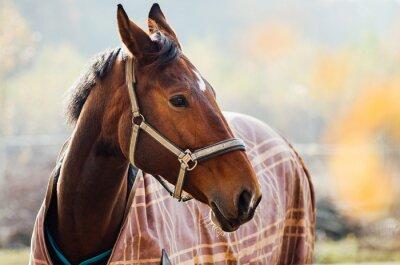 Naklejka koni w stadninie