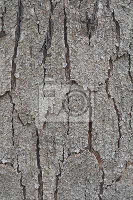 Kora tekstury drewna