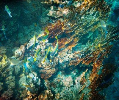 Naklejka Koral