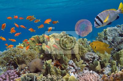 Naklejka Koral i ryb w Morzu Czerwonym. Egipt