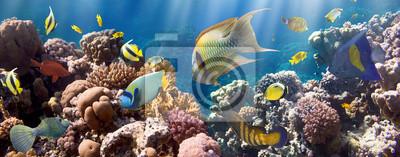 Naklejka Koral i ryby