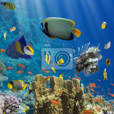 Naklejka Koral i ryby w Czerwonej Sea.Egypt